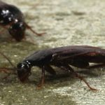 cucarachas comiendo