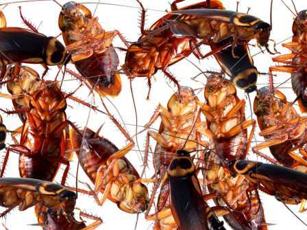cucarachas-mitos
