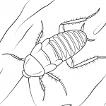 dibujo cucaracha3
