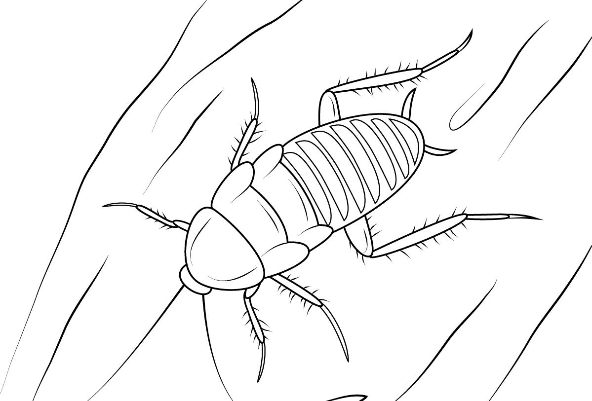 Dibujos De Insectos Para Colorear Para Ninos: Dibujos De Cucarachas » CUCARACHAPEDIA