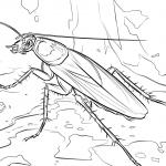 dibujo cucaracha4