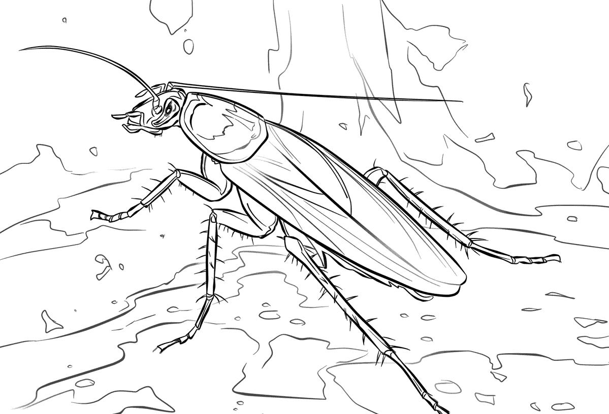 Dibujos de cucarachas » CUCARACHAPEDIA